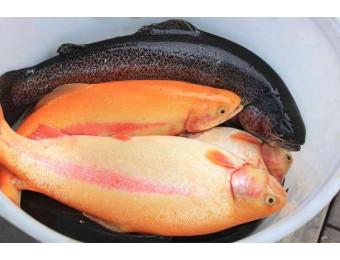 Рыбалка на форель. Для двоих.