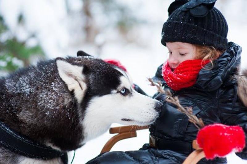 Катание на собачьей упряжке для детей